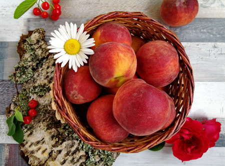 Fresh, ripe peaches in a wicker basket. Peaches are decorated with a white daisy, with a bud of a red rose. Bark and cherry complement the still life. Top view. The photo. Macro shot.