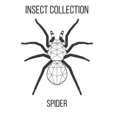 Spider insect geometric lines silhouette isolated on white background vintage vector design element illustration Banco de Imagens