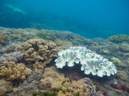 Dead coral on a tropical reef in Indonesia