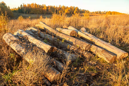 Old rotten logs. A lot of old logs in the open air. Ruin.