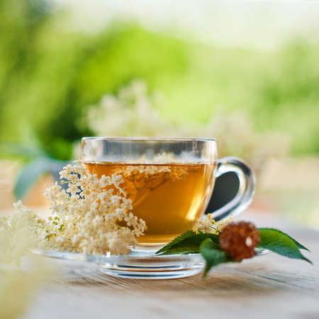 elder flower tea  photo