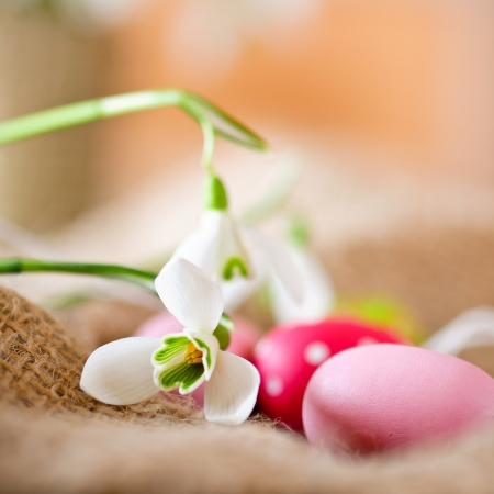easter eggs and little snowdrops  photo