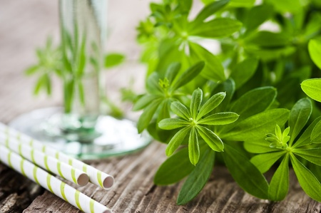 sweet woodruff: sweet woodruff