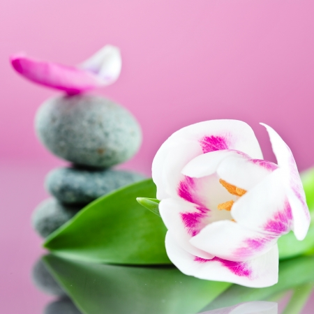 asian tulips: tulip and stacked stones