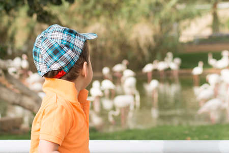 specifies: Little boy looking at flamingos in zoo