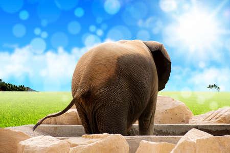 back of Elephant - Sunny Background Stock Photo