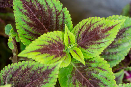 Ornamental decor plant leaves Stock Photo - 104087799