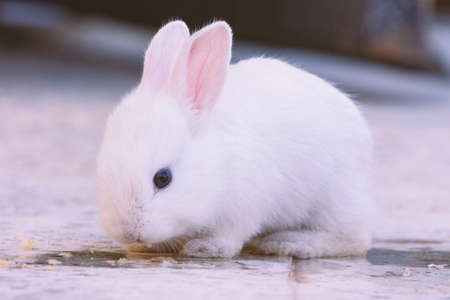 white bunny rabbit looking to viewer, Little bunny sitting outside, Lovely pet for children and family inside house