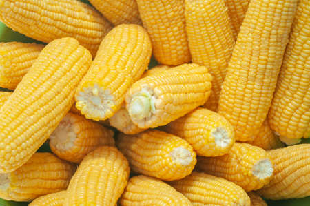Fresh corn on cobs, closeup Stock Photo - 110276468