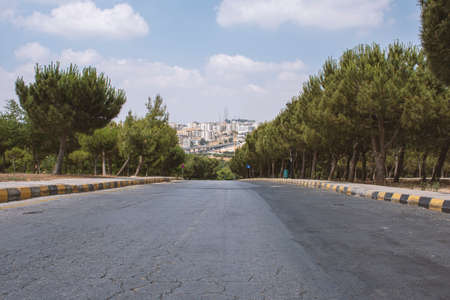 wonderful trees with cloudy sky in king Hussain gardens in Amman in Jordan - view of Amman city