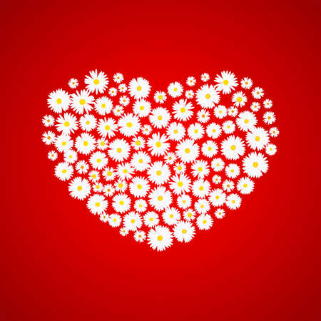 Heart Valentines day card. White daisies on red background. Wedding invitation card template, Love concept. Festive poster for 14 February. Vector illustration