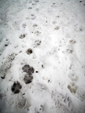 The traces of the dog in the snow are clearly visible. The imprint of the animals paws.