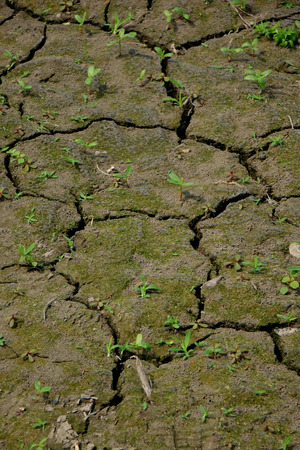 fissure: Background of the barren soil Stock Photo