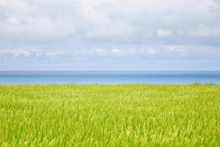 Seascape of rice with sky Stock Photo