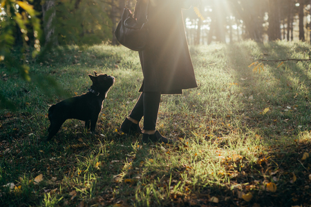 Dog on a walk in the park. Portrait of purebred puppy. Sunny photo of a happy and curious French bulldog dog.