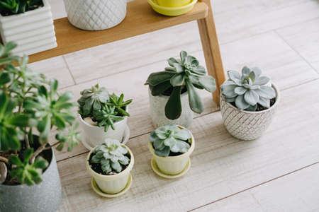 Beautiful succulents in pots. Banco de Imagens