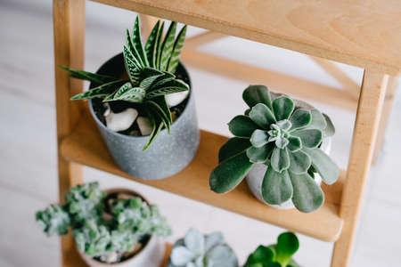 Succulents on a wooden shelf. Beautiful indoor plants in gray pots. Banco de Imagens