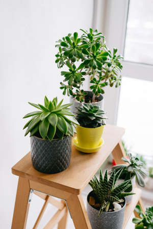 Many indoor plants in white, gray and yellow pots.