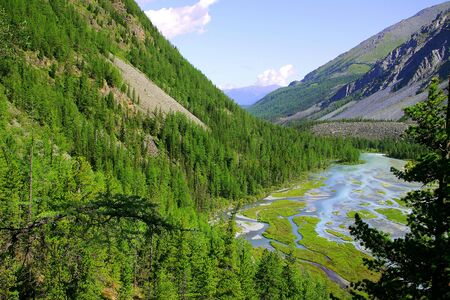 Mountain river and forest in summer time