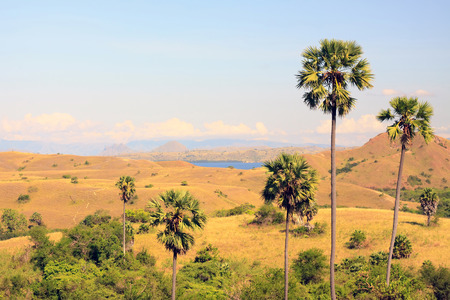 View to palm trees and hills in savanna photo