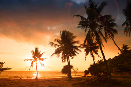 Palm trees at the beach during amazing sunset photo