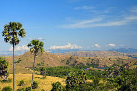 View to the palm trees, hills and small lake on a tropical island photo