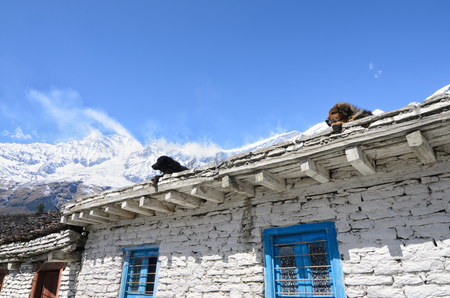 tibetan house: Dogs watching from a roof of a traditional Tibetan house high in Himalayas Stock Photo