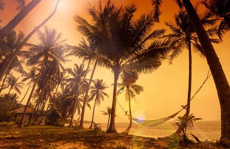 hammock: Para�so tropical - vistas a la hamaca colgada entre las palmeras en la playa durante la puesta del sol imponente rojo dorado Foto de archivo