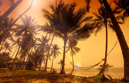 Tropical paradise - view to the hammock hanging between palm trees at the seaside during stunning golden-red sunset