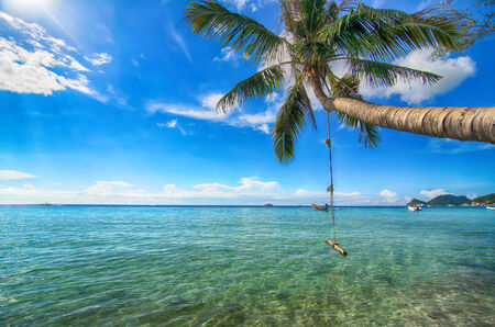 Single palm tree with a hand-made swing above sea water - tropical paradise Stock Photo