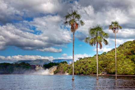 three palm trees: three palm trees growing straight from the lake water in Canaima park