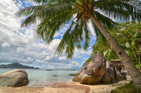 Tropical paradise - palm tree closeup and beautiful sandy beach and sea behind it