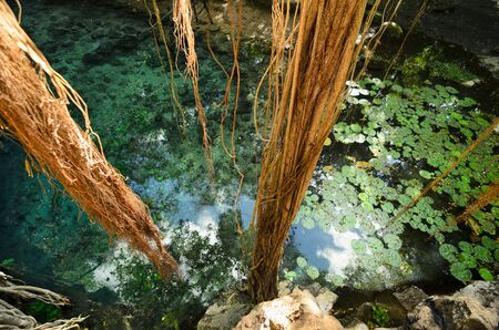 aerial roots: Aerial view to turquoise water lagoon in X-Batun cenote with lianas and tree roots Stock Photo