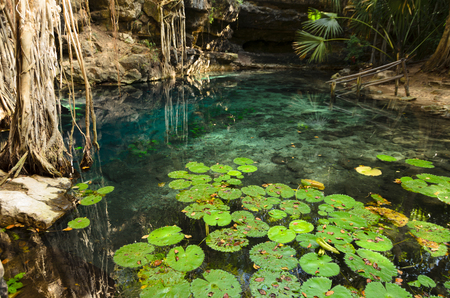 X-Batun Cenote - turquoise fresh water with water lilies and rocky wall with fantastic tree roots photo
