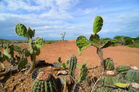 types of cactus: Differets cactus types closeup in bright orange terrain of Tatacoa desert