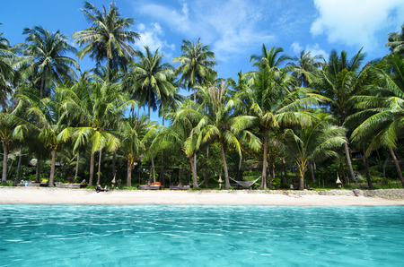 landscape: Lovely Beach with Turquoise Water and Green Palm Trees on a Tropical Island
