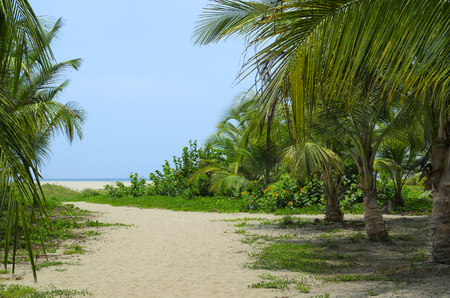 Sandy path through coconut palm tree forest to the beach