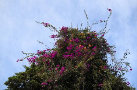messy: Blooming messy tree against bluish-white sky Stock Photo