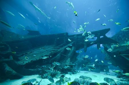 Mundo submarino - peces que nadan alrededor sinked y barco roto Foto de archivo - 56479401