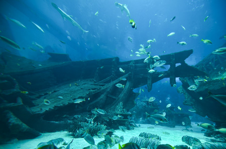 Underwater world - fishes swimming around sinked and broken boat