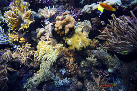 reef fish: Coral reef full of little colorful fish