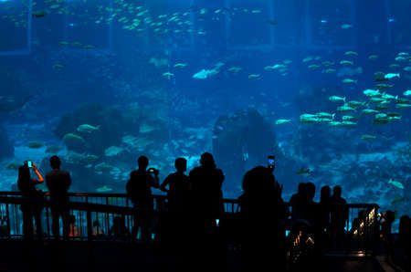 massive: SINGAPORE, SINGAPORE, 27 AUGUST 2014: People in Singapores Aquarium taking photos in front of massive aquarium.
