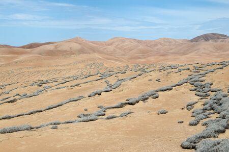 tillandsia: Desert covered with tillandsia plant
