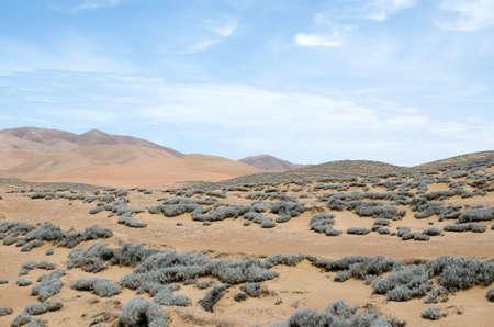 tillandsia: Tillandsia plant - inhabitant of desert Stock Photo