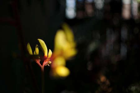 暗闇の中で輝く黄色なふわふわの芽
