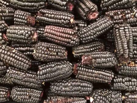 紫色のトウモロコシ 写真素材 - 82877819