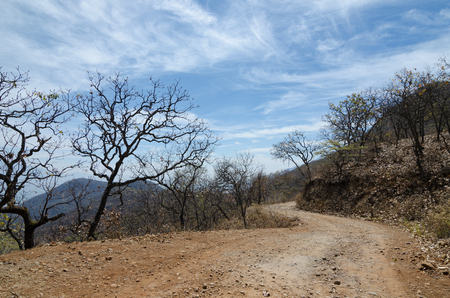 Road through the woods in dry season Stock Photo