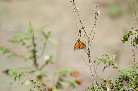 Monarch butterfly on green plant with bokeh background Banco de Imagens