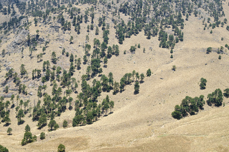 Arial shot of the pine tree forest on the rocky slope with dry grass Stock Photo