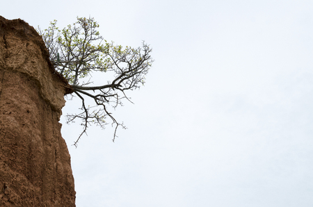 Tree growing in the corner of soil formation in the desert - agains cloudy sky 写真素材